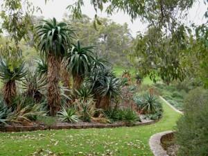 Kings Park : une plantation de je-ne-sais-quoi (désolé, j'ai pas de manuel de botanique)
