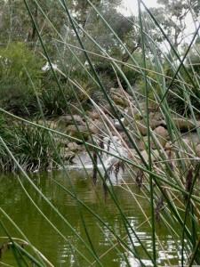 Kings Park : une petite cascade artificielle